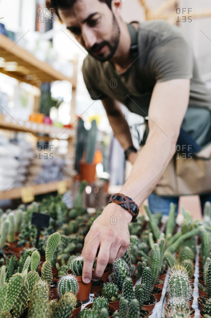Worker in a garden center picking up a cactus
