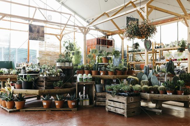 Assortment of cacti in a garden center