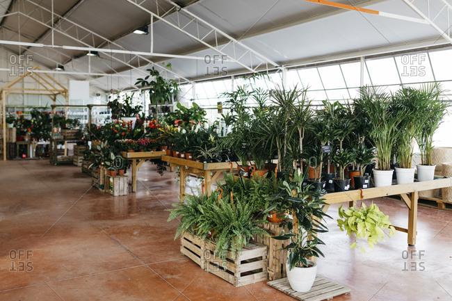 Assortment of plants in a garden center