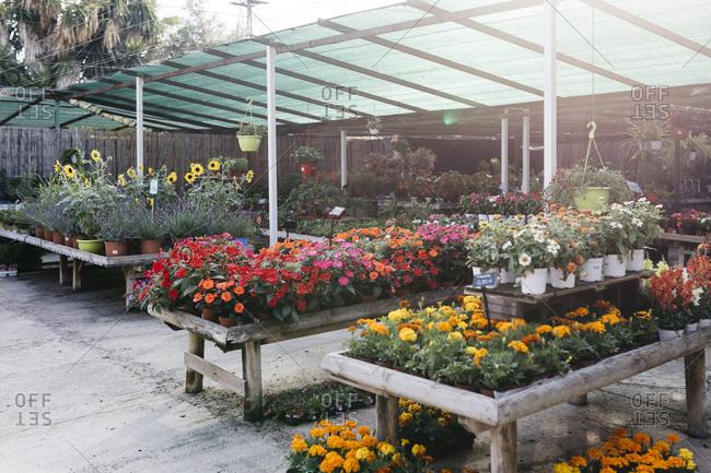Assortment of flowers in a garden center