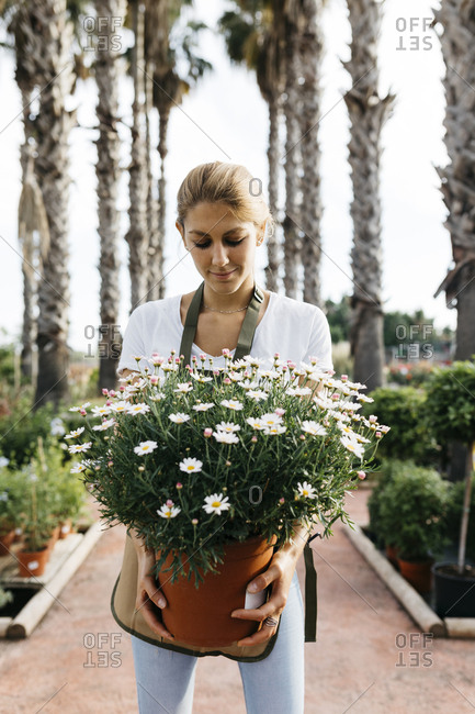 Female worker in a garden center holding a daisy plant