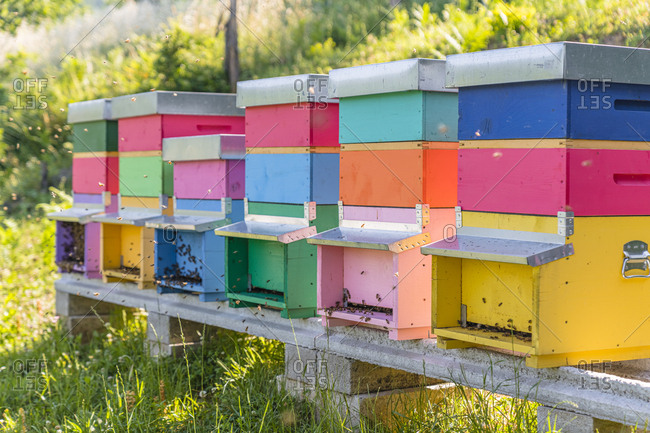 Colorful beehives and honeybees