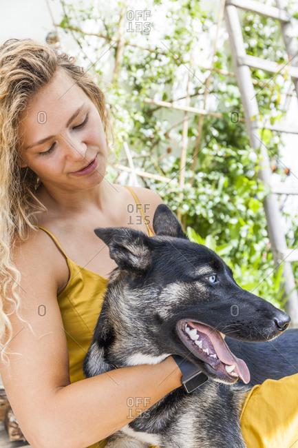 Husky shepherd mongrel dog with his mistress