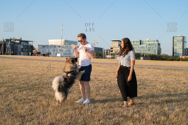 Couple playing with dog in field with city in background
