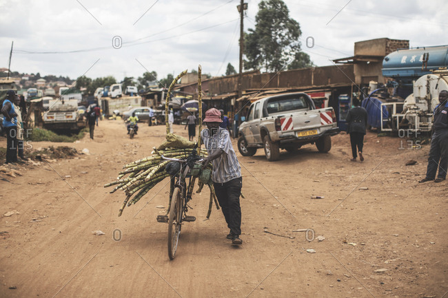 Kampala, Uganda - October 8, 2018: A seller transporting sugarcane on his bicycle