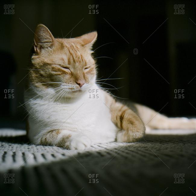 Orange tabby cat lying down in the sun