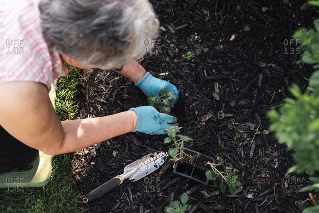 Overhead shot of an older woman planting flowers in a garden.