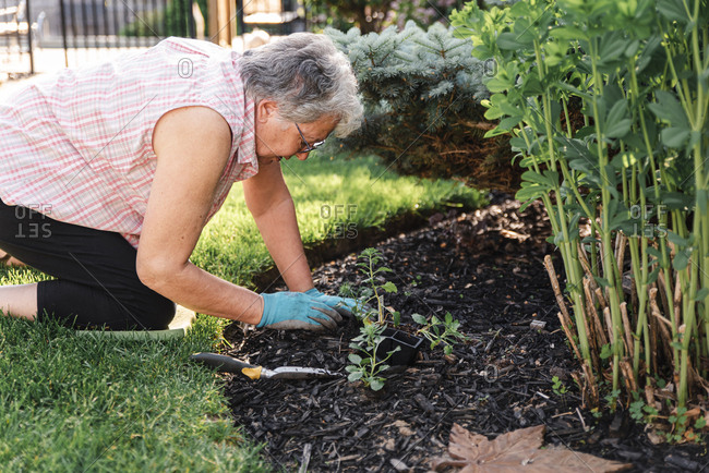 Older woman planting flowers in a garden on a summer day.