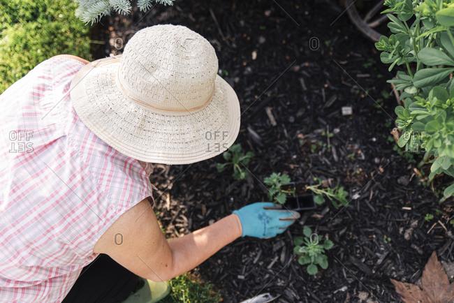 Overhead shot of older woman in hat planting flowers in a garden.