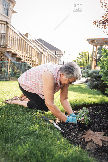 Older woman planting flowers in a backyard garden on a summer day.