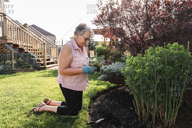 Older woman holding flowers to plant in a garden on a summer day.
