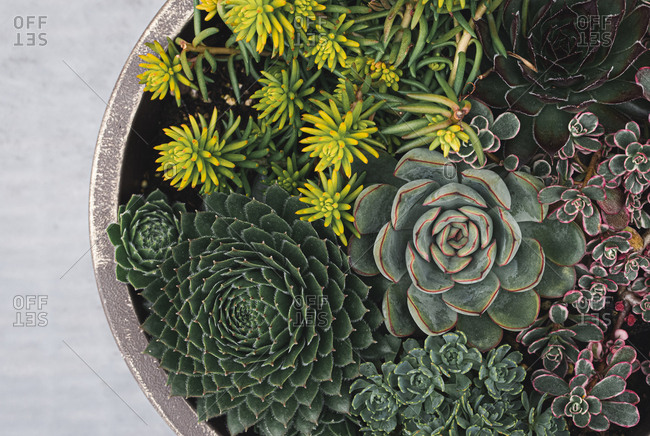 Arrangement of succulent plants in a planter shot from above.