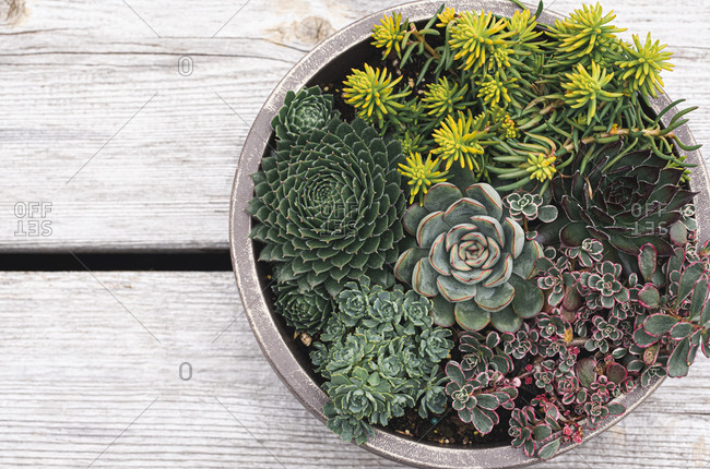 Succulent plants in a planter on a wooden background shot from above.