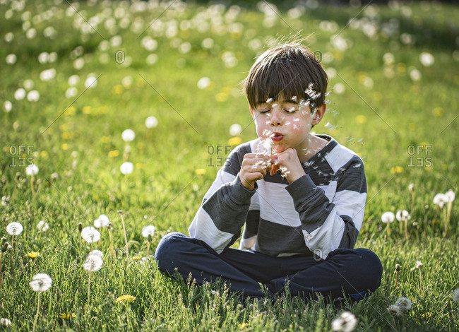 Young boy sitting on the grass blowing seeds off of dandelion flower.