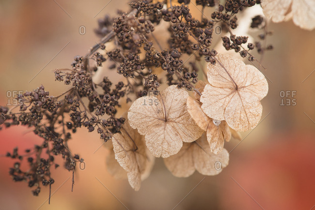 Dried leaves on branch