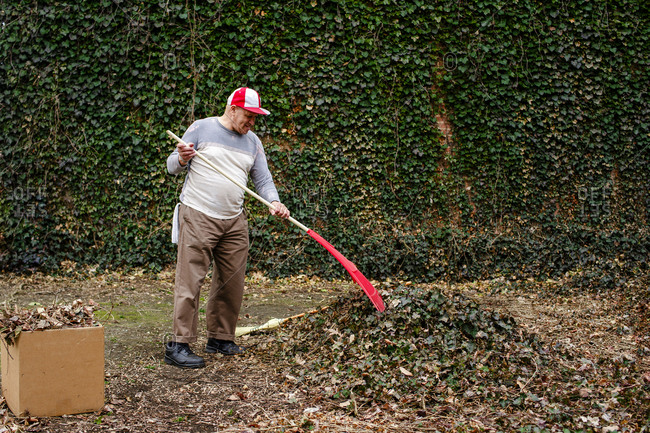 A senior man with rag in his pocket rakes a pile of leave