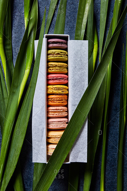Colorful macarons in a box with greenery background viewed from above