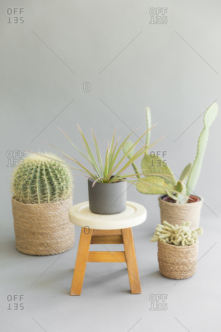 Still life of cactuses and a stool with a plant on it, set on a black background.