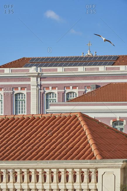 Bird flying over buildings Lisbon, Portugal