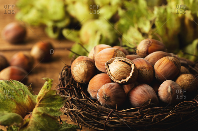 Close up of hazelnuts in a nest with one cracked open nut