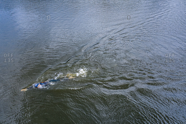 Aerial view of a triathlete crawling in a lake