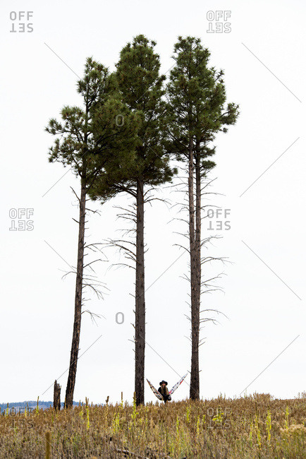 A woman sits in a hammock between two tall trees