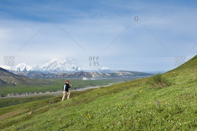 Senior Man Hiking On The Tundra In Thorofare Pass With Mt. McKinley In The Background