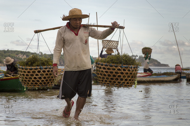 Indonesia, Bali, Nusapenida - April 27, 2014: Seaweed Farmer using a yoke to carry baskets filled with seaweed