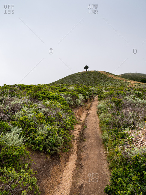 Trail leading to lone tree on top of hill