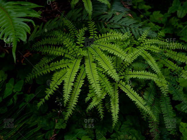 Detail of ferns growing in rain forest