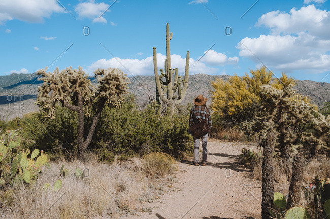 Young man day hiking through Saguaro Forests in the Sonoran Desert