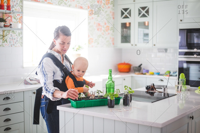 Working mother planting plants in container while carrying daughter in kitchen at home