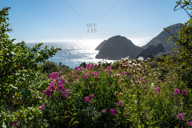 Beautiful pink wildflowers growing on coast
