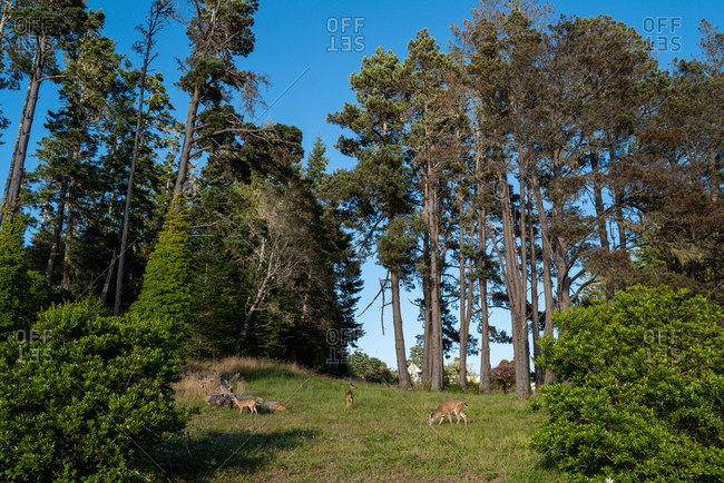 Three deer grazing in a forest