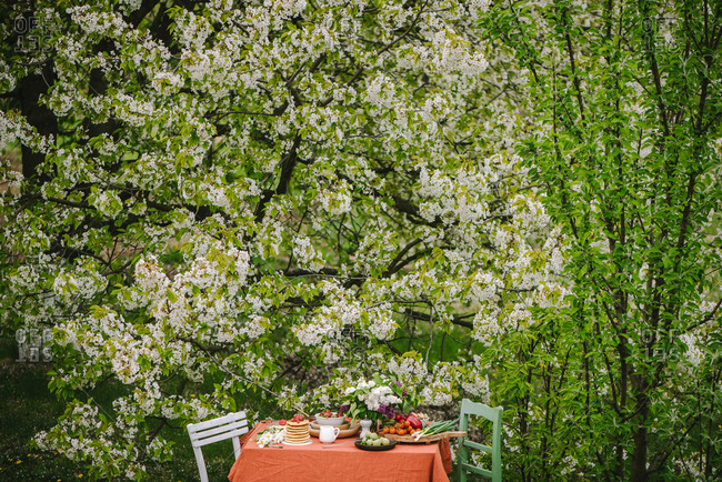 Outdoor breakfast table setting by a large white lilac bush
