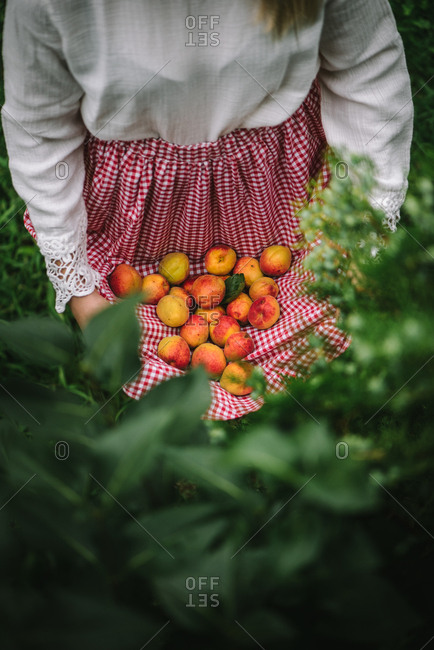 Woman holding fresh picked stone fruit in her apron