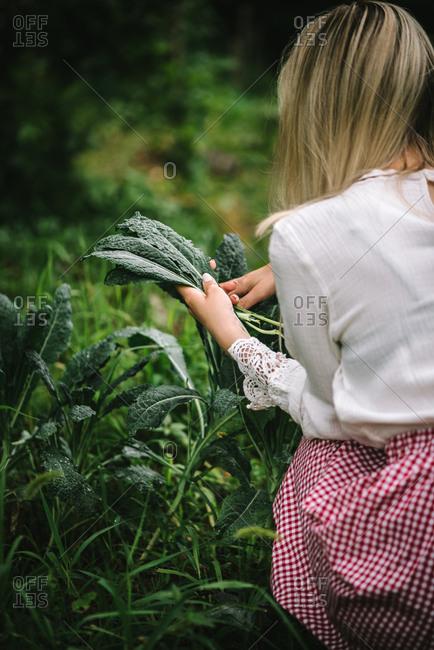 Woman picking fresh kale in a garden