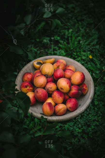 Stone fruit on a wooden plate outdoors