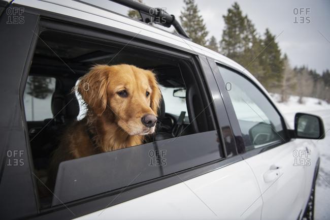 Dog peeking through window while sitting in car on snowy landscape