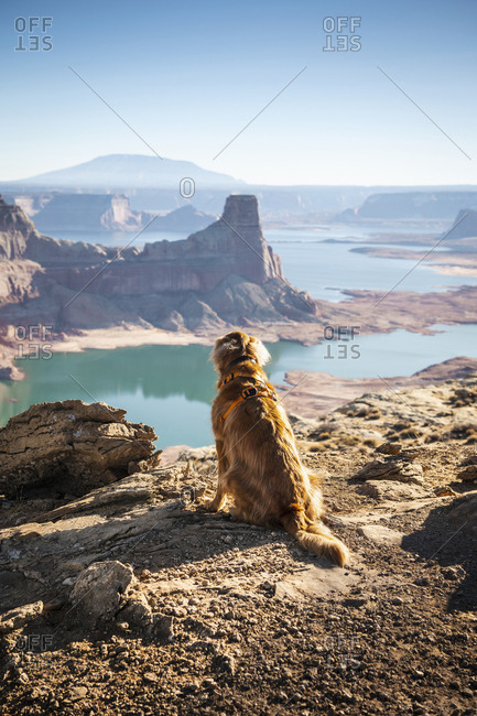Dog sitting on cliff with Powell lake in background at Utah
