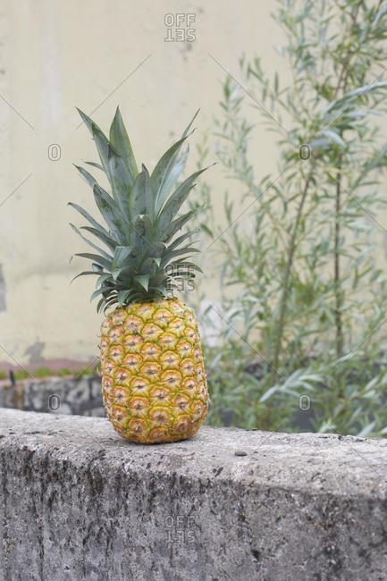 Pineapple on concrete ledge