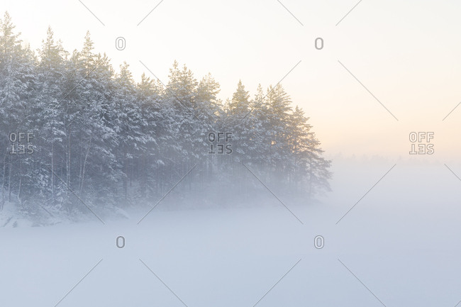 Trees next to the frozen Lake Skiren in Sweden
