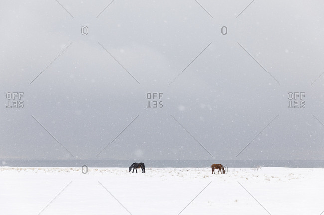 Horses in snow covered field