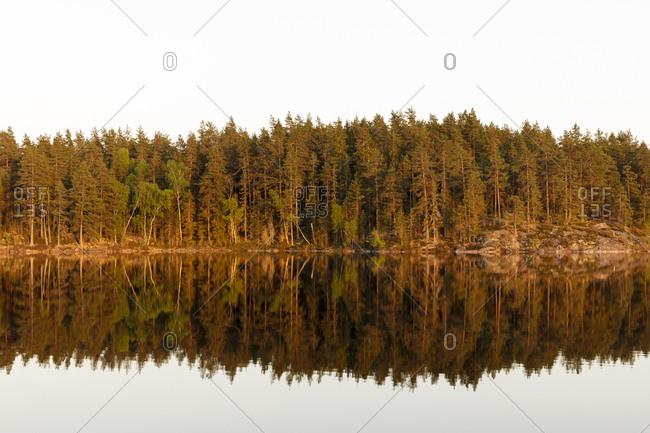 Forest reflected in Skiren Lake,  Sweden