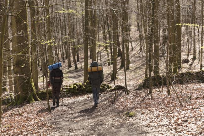 Men hiking in forest - Offset
