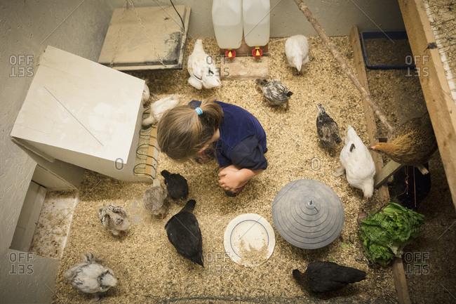 Girl in chicken coop - Offset