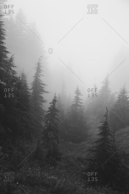 Fog in Mount Hood National Forest in Oregon