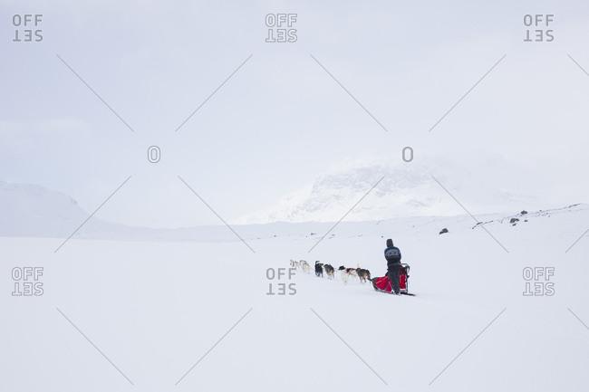 Person dog sledding on Kungsleden trail in Lapland,  Sweden