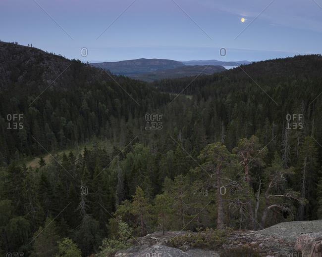 Pine tree forest in Skuleskogen National Park,  Sweden