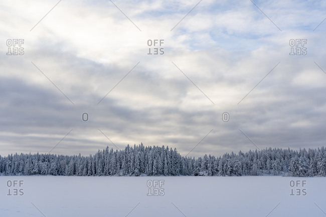 Snow and forest under overcast sky in Kilsbergen,  Sweden